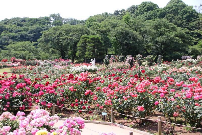 バラ 向ヶ丘 園 遊園